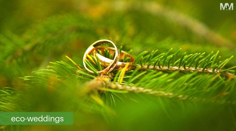 wedding rings for eco wedding